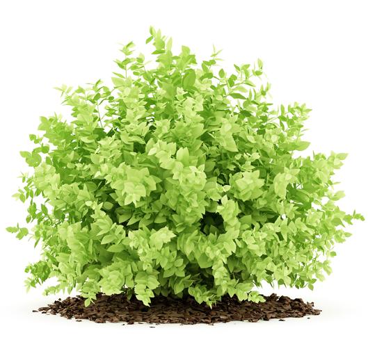 Elmi Pantina Gartenbau Bepflanzungen