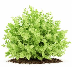 Elmi Pantina Gartenbau Bepflanzung in Calw